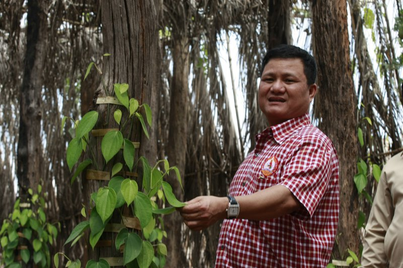 The Chinese multi-million dollar timber smuggling  is driving rare trees to extinction.